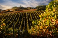 Vineyards and SPA pampering in Tuscany