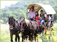 Horse and Carriage excursion - Park of Uccellina near Grosseto